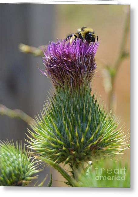 Pollen Gathering Greeting Card by Chalet Roome-Rigdon