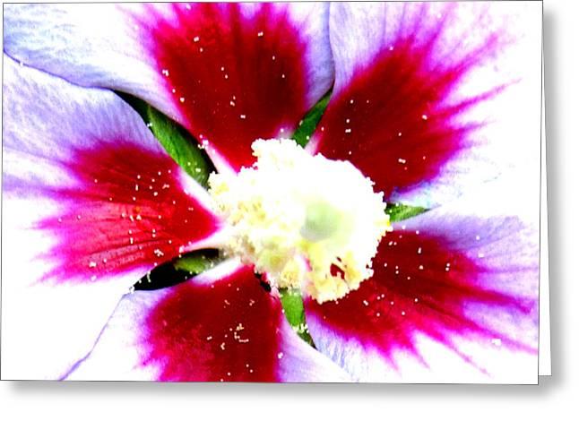 Pollen Greeting Card