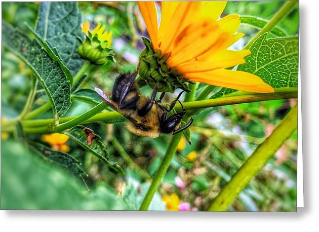 Greeting Card featuring the photograph Pollinated Buzz by Jame Hayes