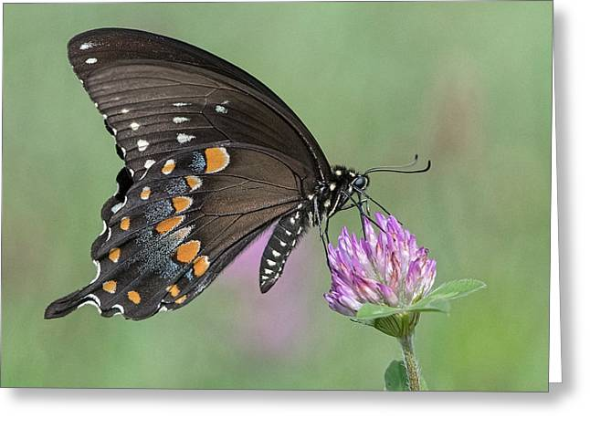Greeting Card featuring the photograph Pollinating #1 by Wade Aiken