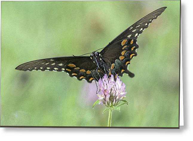 Greeting Card featuring the photograph Pollinating #2 by Wade Aiken