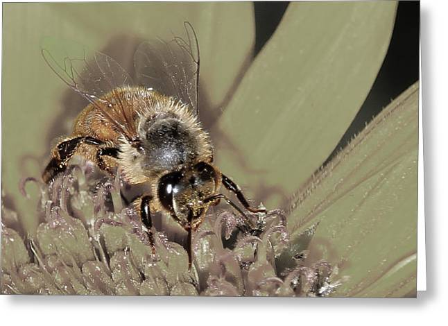 Pollinating Bee Greeting Card
