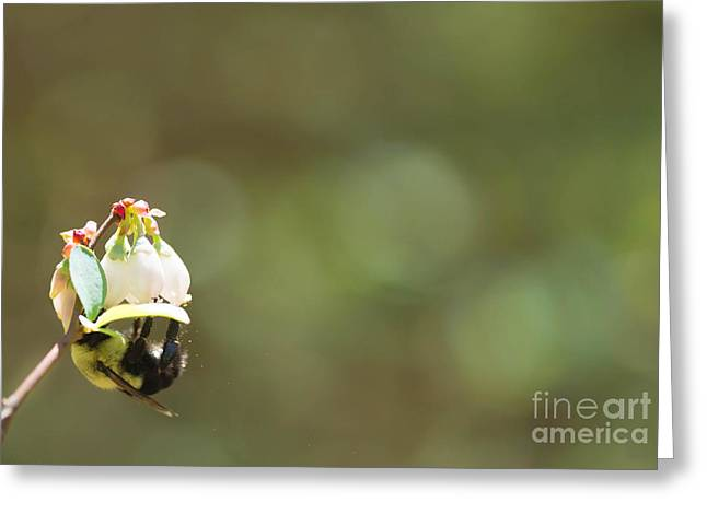 Pollination Greeting Card by Kim Henderson