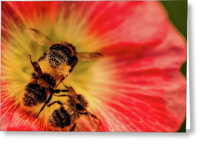 Pollination Greeting Card by Verena - Timschenko