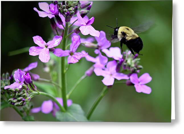 Pollinator Greeting Cards - Pollinator in Action Greeting Card by Teresa Mucha
