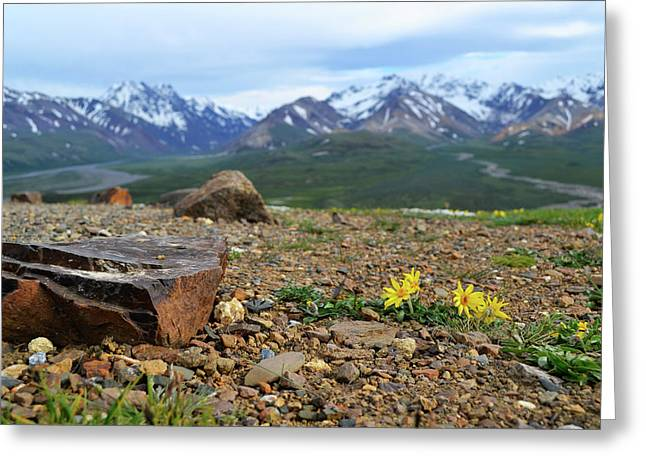 Polychrome Pass, Denali Greeting Card