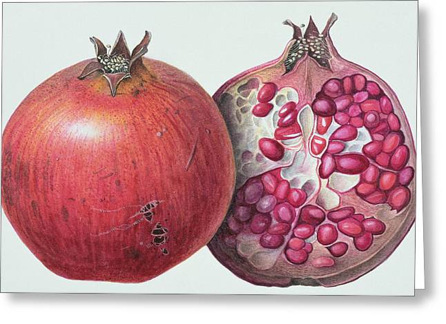 Tropical Fruit Greeting Cards - Pomegranate Greeting Card by Margaret Ann Eden