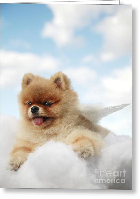 Pomeranian On Clouds Greeting Card by Brandon Tabiolo - Printscapes