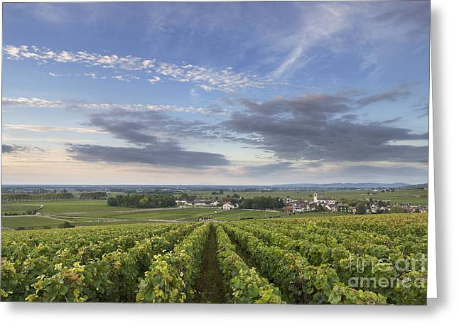 Pommard - Burgundy Greeting Card by Rod McLean