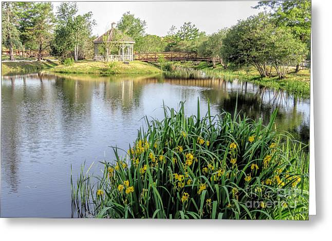 Pond And Gazebo At Cordage Park   Greeting Card by Janice Drew