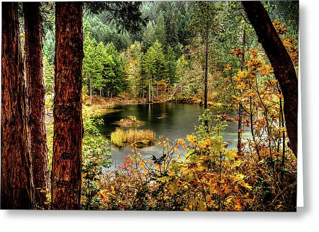 Pond At Golden Or. Greeting Card