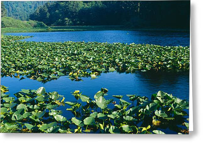 Pond Covered With Lilies Near Highway Greeting Card