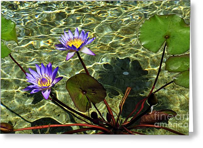 Pond Florals Greeting Card by Clayton Bruster