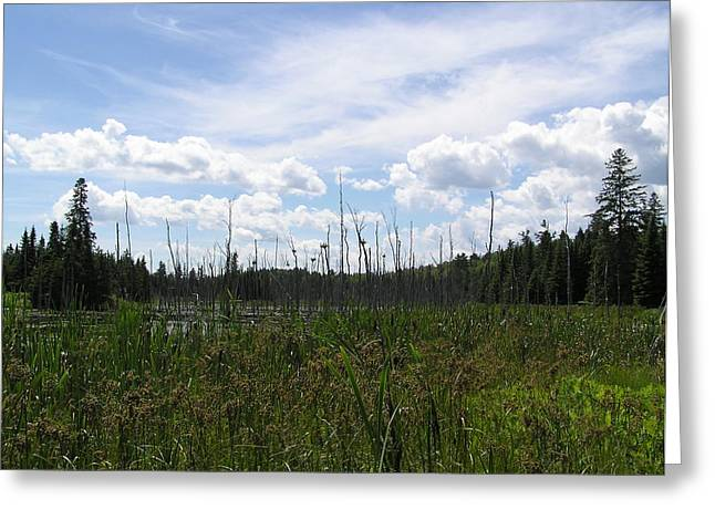 Pond In A Distance Greeting Card by Richard Mitchell