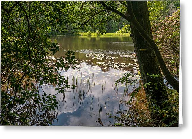 Pond In Spring Greeting Card