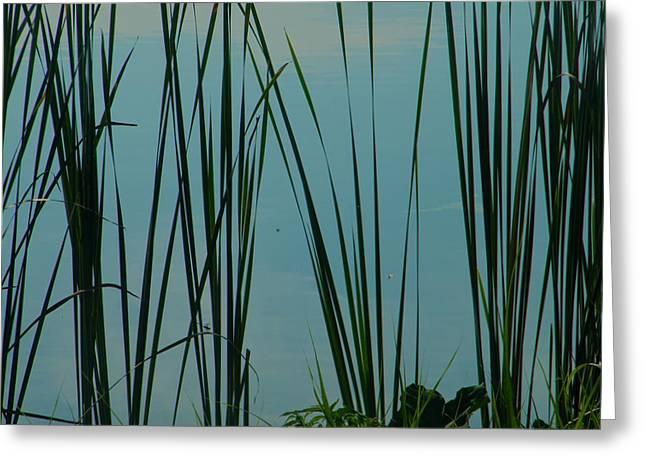 Pond Greeting Card by Nereida Slesarchik Cedeno Wilcoxon
