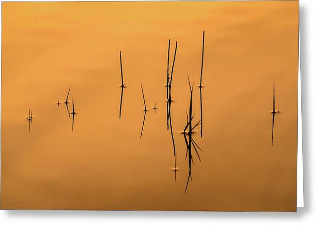 Pond Reeds In Reflected Sunrise Greeting Card