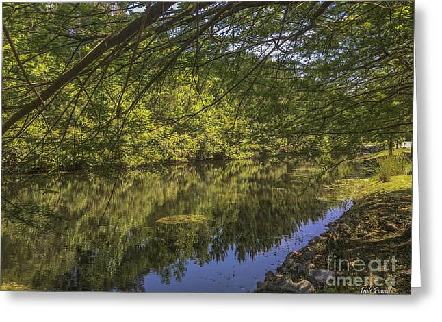 Pond Reflections In Mount Pleasant Sc Greeting Card by Dale Powell