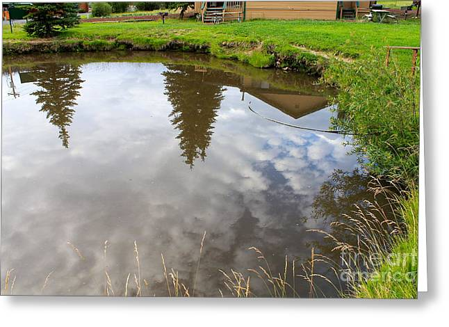 Pond Reflections Greeting Card by Pamela Walrath