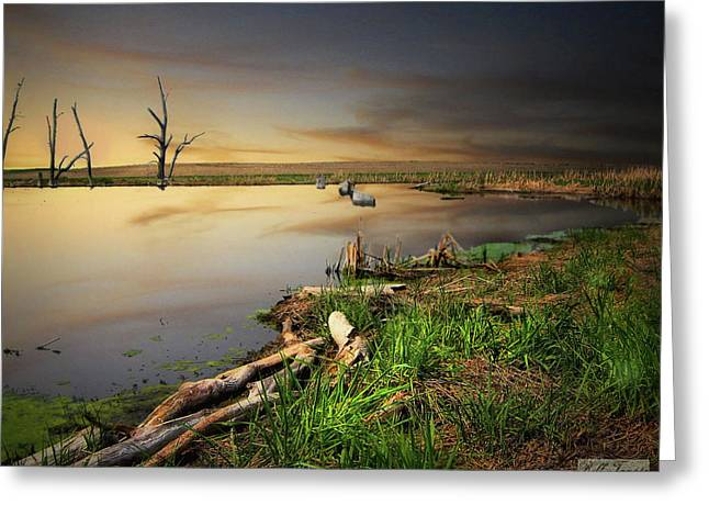 Pond Shore Greeting Card