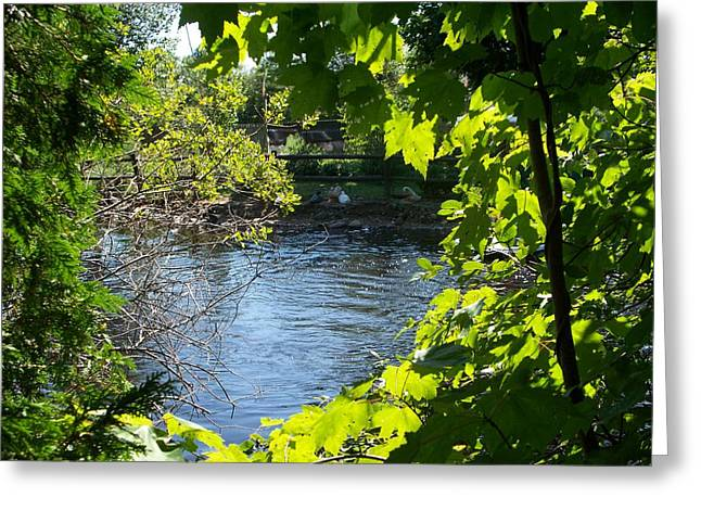 Pond Through The Trees Greeting Card by Rosanne Bartlett