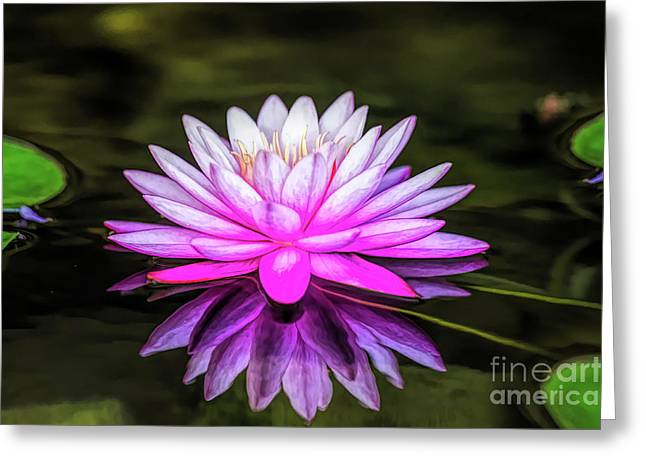 Pond Water Lily Greeting Card