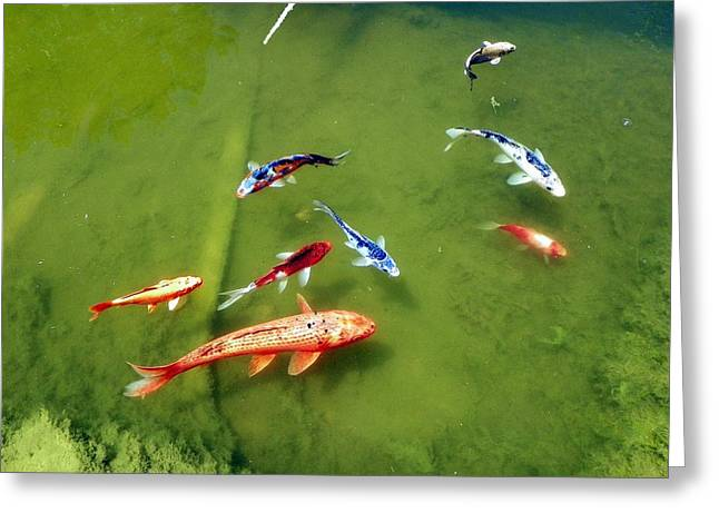 Pond With Koi Fish Greeting Card