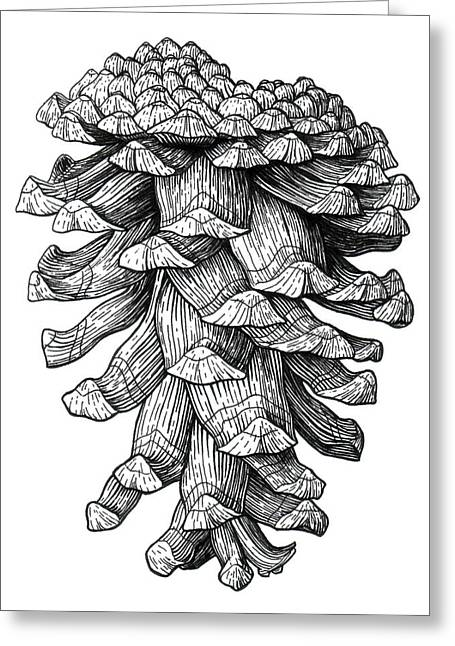 Ponderosa Pinecone Greeting Card by Kirsten Wahlquist