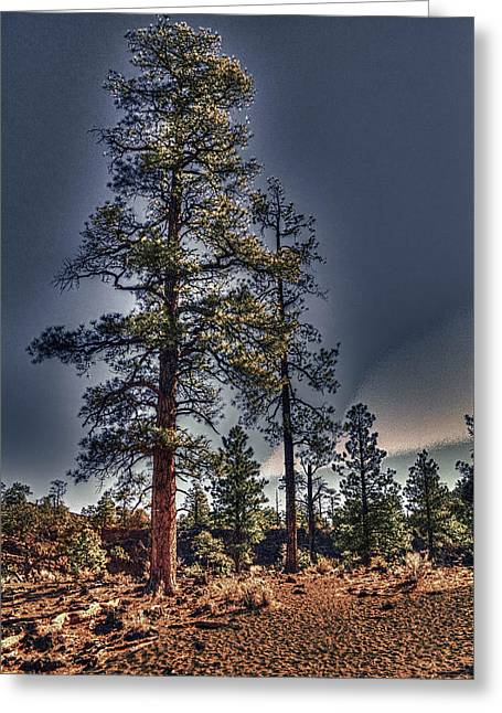 Ponderosa Pines At The Bonito Lava Flow Greeting Card