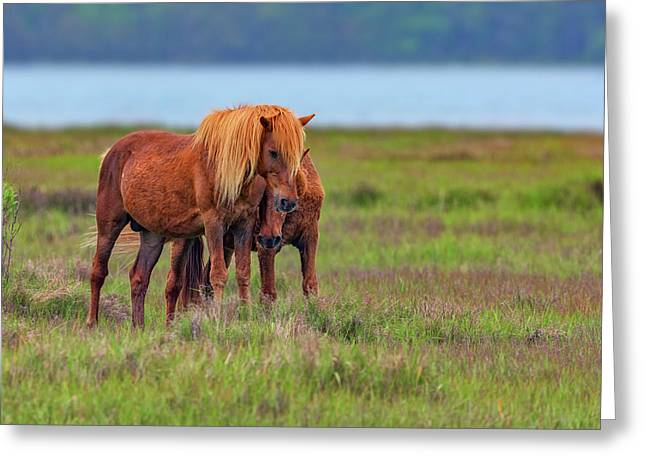 Ponies On Assateague Greeting Card