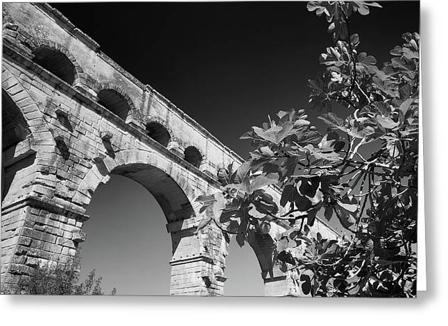 Pont Du Gard And Fig Tree Greeting Card