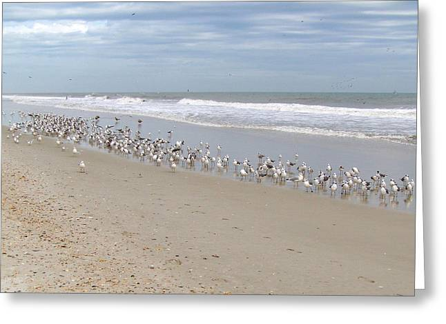 Ponte Vedra Birds Greeting Card