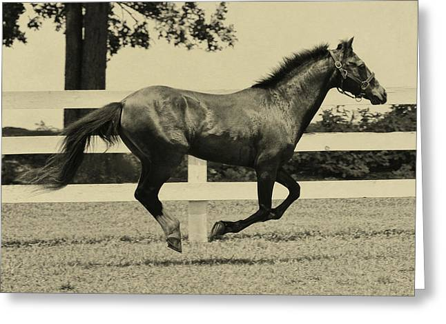 Greeting Card featuring the photograph Pony Play Time by Dressage Design
