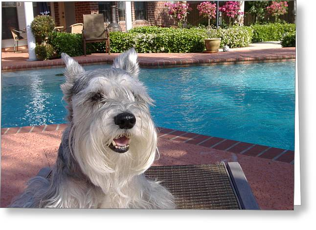 Greeting Card featuring the photograph Pooch At Poolside by Diane Ferguson