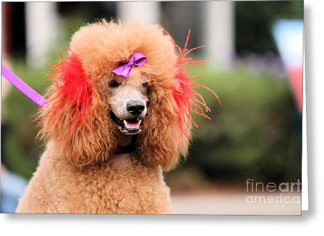 Poodle 1 Greeting Card