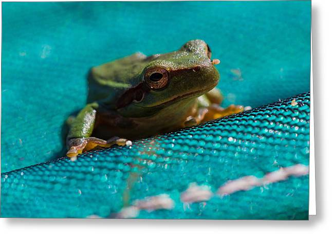 Greeting Card featuring the photograph Pool Frog by Richard Patmore
