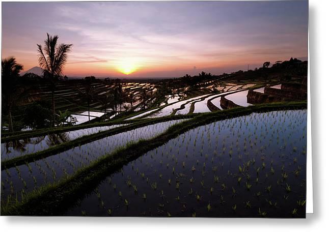 Pools Of Rice Greeting Card