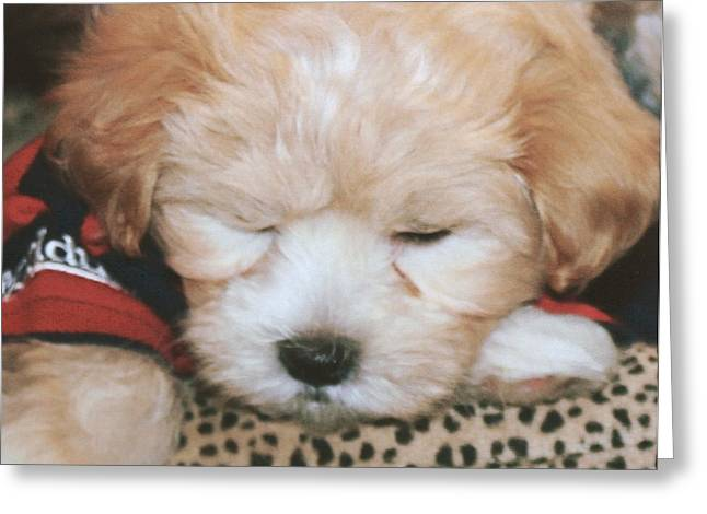 Greeting Card featuring the photograph Pooped Pup by Diane Merkle