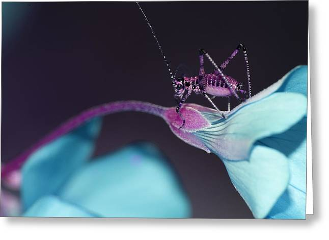 Greeting Card featuring the photograph Pop Macro No. 3 by Laura Melis