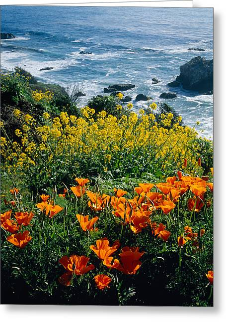 Poppies Along Coast Ca Usa Greeting Card by Panoramic Images