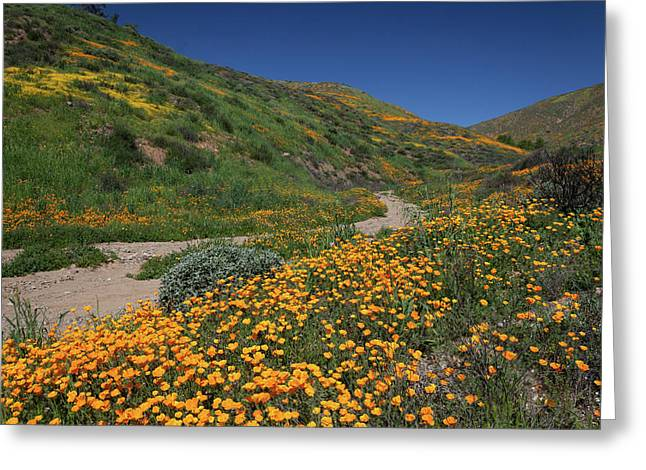 Greeting Card featuring the photograph Poppies Along Riverbed by Cliff Wassmann