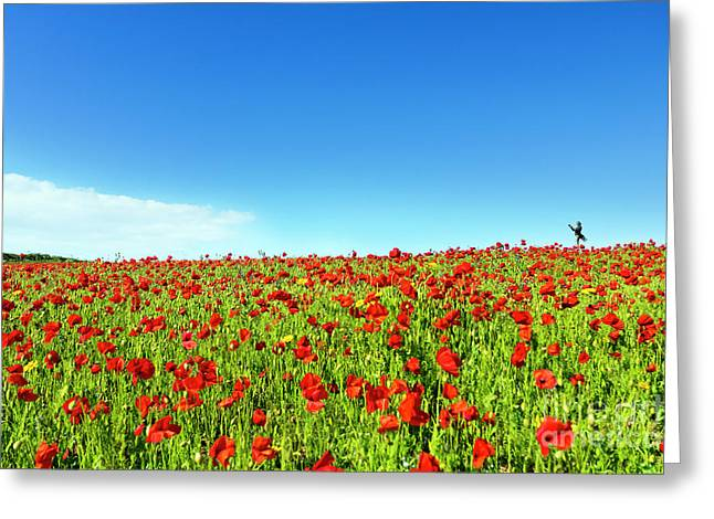 Poppies And A Photographer Greeting Card by Terri Waters
