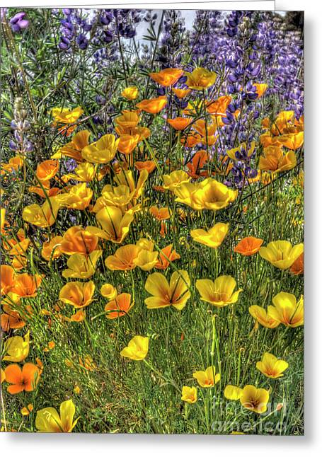 Greeting Card featuring the photograph Poppies And Lupines by Jim and Emily Bush