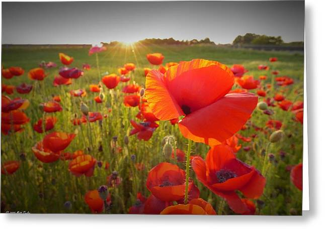 Poppies At Sunset Greeting Card