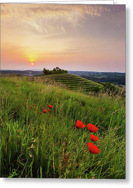 Poppies Burns Greeting Card