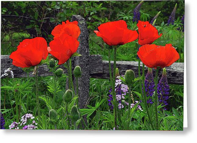 Poppies By Fence Greeting Card