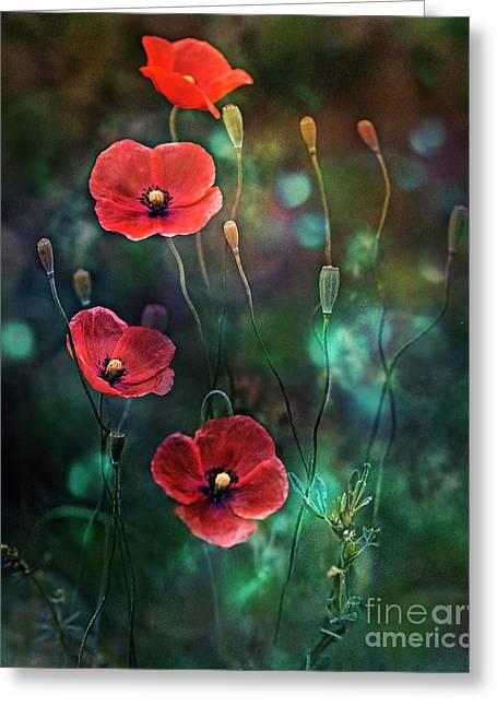 Poppies Fairytale Greeting Card
