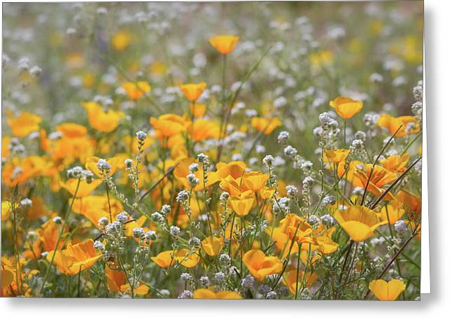 Greeting Card featuring the photograph Poppies Fields Forever  by Saija Lehtonen