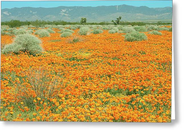 Greeting Card featuring the photograph Poppies For Ever - Poppy Fields Mohave Desert California by Ram Vasudev