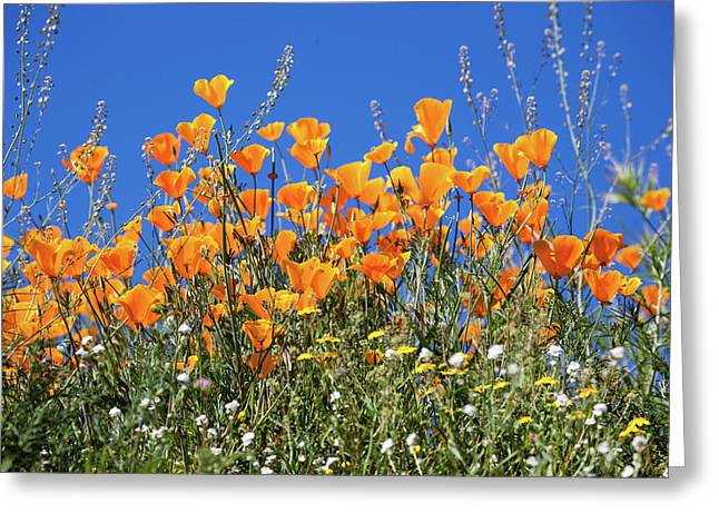 Greeting Card featuring the photograph Poppies From Below by Cliff Wassmann